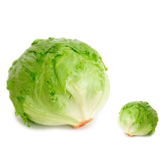 Cabbage 1Pc approx. 500 to 800 gm
